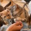モフりにいきたい!新潟県内の猫カフェ&猫と触れ合えるお店まとめ