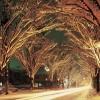 【新潟県】冬のイルミネーションスポット6選!雪面にきらめく光が美しい!