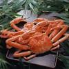 【復興支援】糸魚川に行って応援、食べて応援。激ウマ糸魚川グルメ7選