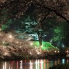 【桜の名所を厳選】新潟のおすすめ♡お花見スポット10選!2017年の開花日や見頃は?