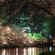 【桜の名所を厳選】新潟のおすすめ♡お花見スポット10選!開花日や見頃は?