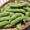 県内第1号「くろさき茶豆」がGI登録へ。大農業都市新潟の実現に向け、一歩前進!