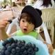 【上越・中越エリア】秋の味覚を堪能!旬のフルーツ・栗・きのこを収穫できる観光農園まとめ!