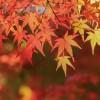 新潟の紅葉スポット7選!山・川・公園の名所をまとめてご紹介♪