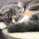 猫好き必見!新潟市東区の猫カフェ『猫喫茶 空陸家』で可愛い猫ちゃんたちをモフってきた!