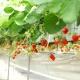 新潟市でフルーツ狩りができるおすすめ観光果樹園8選!旬の果物食べ放題!