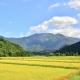 新潟米のブランド・品種まとめ!3大産地や美味しい理由を調べてみた!