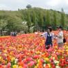 子供連れにおすすめ!家族で楽しめる新潟の公園まとめ